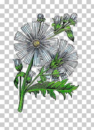 Chinese Medicinal Herbs: A Modern Edition Of A Classic Sixteenth-century Manual Chrysanthemum Medicinal Plants Medicine PNG