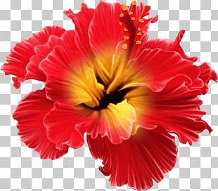 Flower Tropics Floral Design PNG