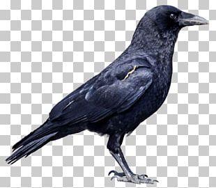 Crows Deer PNG
