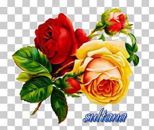 Open Rose Borders And Frames Floral Design PNG