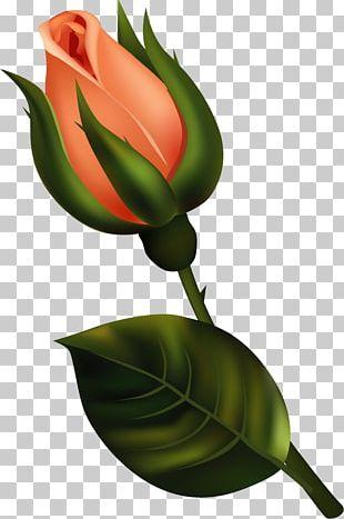 Bud Flower PNG