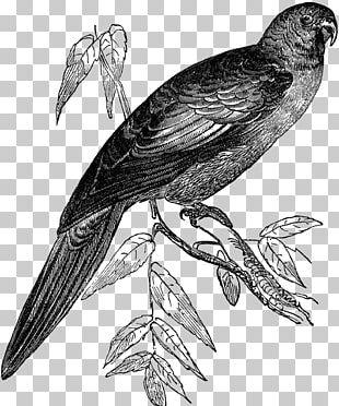 Hawk Finches Bird Buzzard Beak PNG