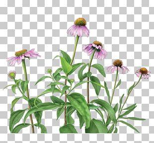 White Tea Organic Food Green Tea Tea Bag PNG