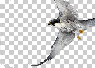 Bird Watercolor Painting Drawing Work Of Art PNG