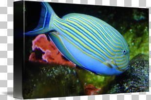 Tropical Fish Aquarium Coral Reef Fish Saltwater Fish PNG