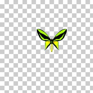 Butterfly Kosmos-Enzyklopxe4die Der Schmetterlinge Insect Logo Pattern PNG