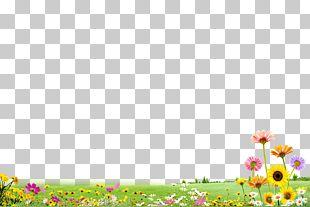 Grass Flower Garden Flower PNG