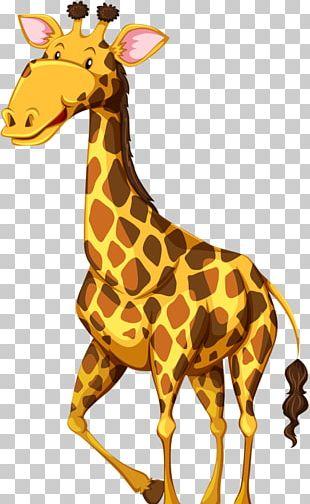 Giraffe Wildlife Illustration PNG