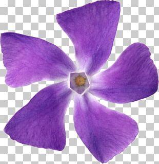 Purple Flower Petal Violet Lilac PNG