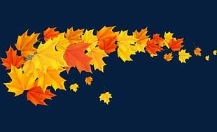 Autumn Yellow Maple Leaf PNG