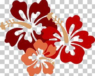 Hawaiian Hibiscus Flower Drawing PNG