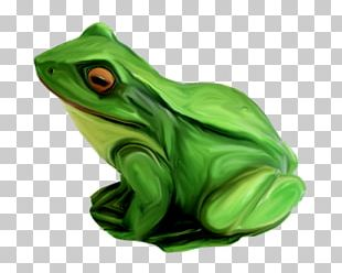 True Frog Tree Frog Toad Green PNG
