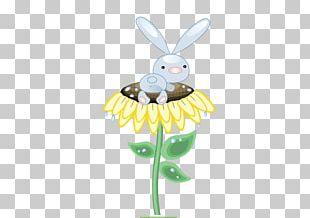 Rabbit Hare Common Sunflower PNG