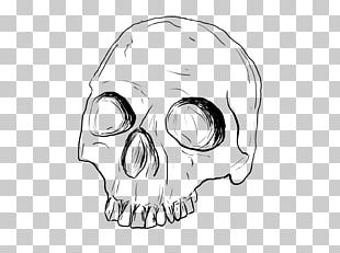 Drawing Skull Line Art Sketch PNG