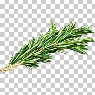 Olive Oil Rosemary Essential Oil Pizza PNG