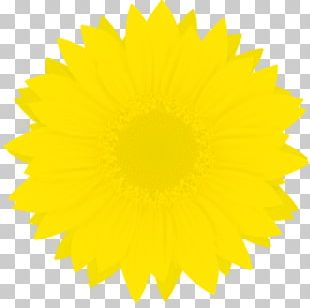 Sunflower Color Flower PNG