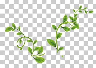 Leaf Green Vine PNG