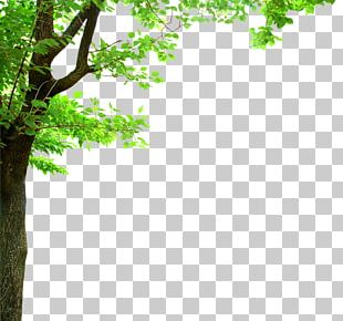 Shade Tree Branch Oak PNG