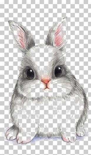 European Rabbit Drawing PNG