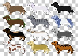 Dog Breed Dachshund Line Art Drawing PNG