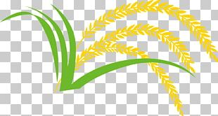 Rice Gadu Paddy Field PNG