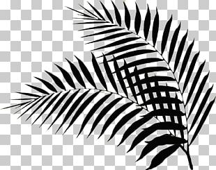 Palm Branch Leaf Hotel Palm Sunday Photography PNG