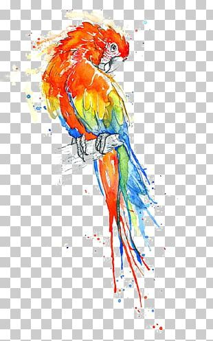 Bird True Parrot Watercolor Painting Macaw PNG
