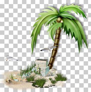 Arecaceae Sea Coconut Tree PNG