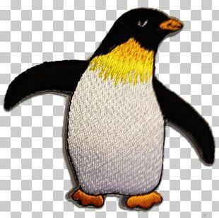 King Penguin Flightless Bird Beak PNG