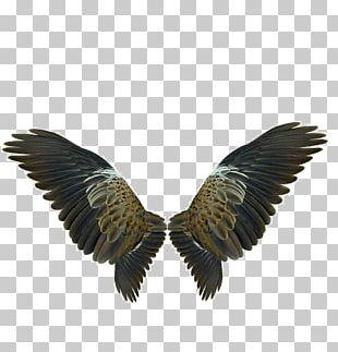 Wing Flight PNG