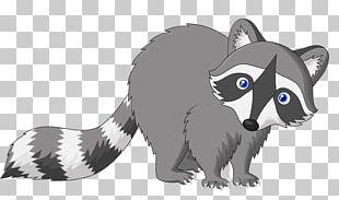 Raccoon Cartoon Drawing PNG