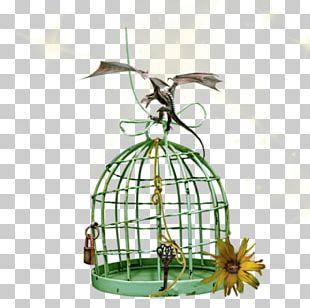 Cage Bird Cartoon PNG