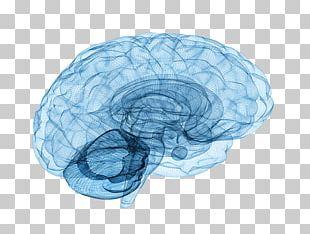 Brain Tumor Neuroscience Neurology Spinal Cord PNG