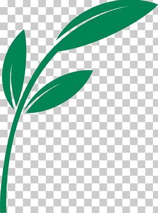 Leaf Plant Stem Line Logo PNG