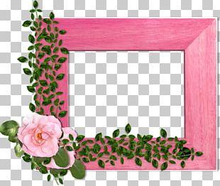 Garden Roses Frames Floral Design Flower Photography PNG