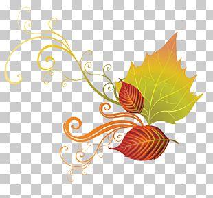 Autumn Leaf Color PNG