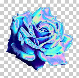 Blue Rose Garden Roses Tumblr Blog PNG