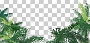 Arecaceae Leaf Areca Palm PNG