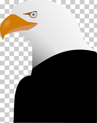Bald Eagle PNG