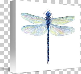 Dragonfly Insect Watercolor Painting Drawing PNG