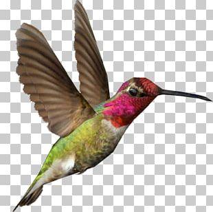 Zoo Tycoon 2 Hummingbird PNG