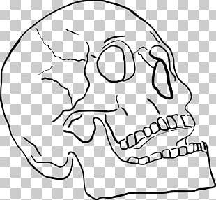 Jaw Mouth Skull Bone Mandible PNG