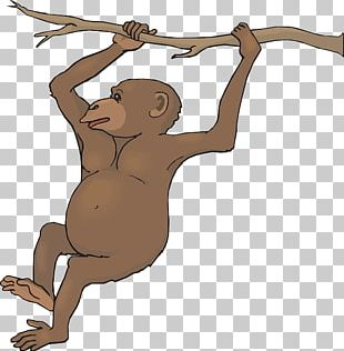 Monkey Free Content PNG