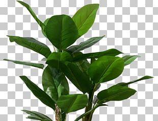 Musa Basjoo Banana Leaf Tree Plant PNG