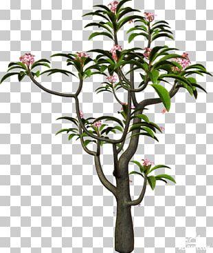 Branch Tree Shrub Information PNG