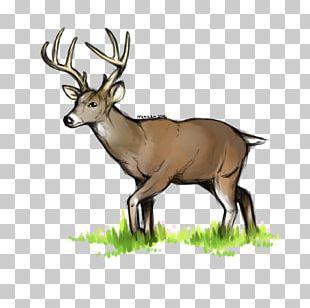 White-tailed Deer Elk Reindeer Antler PNG