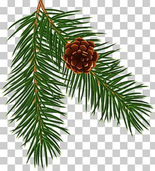 Spruce Christmas Ornament Pine Fir Larch PNG