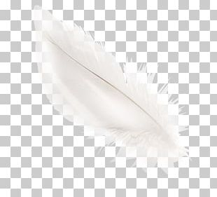 White Feather Material Black PNG