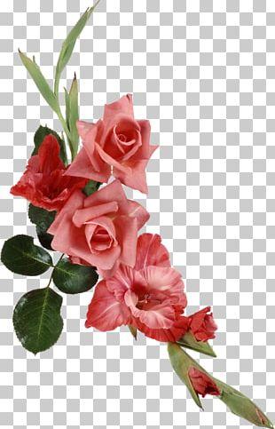 Cut Flowers Beach Rose Ipomoea Nil PNG