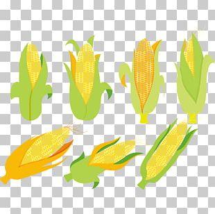 Corn On The Cob Maize Corncob Euclidean PNG